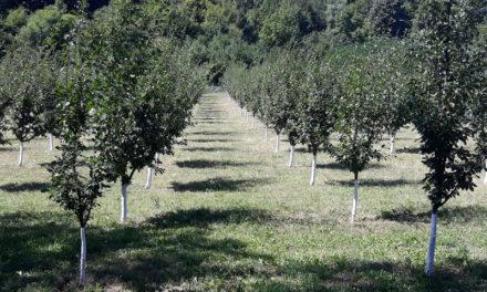 Традиционната лятна среща на АДМБ – И за вълнението да видиш как засаденото от теб преди години дава плодове