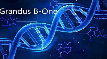 Grandus® B-One – НОВО ПОКОЛЕНИЕ ИНЖЕКЦИОНЕН ВЪЗСТАНОВИТЕЛЕН БИОЛОГИЧЕН ИМПЛАНТ