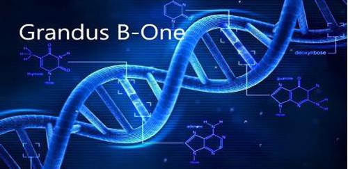 GRANDUS® B-ONE